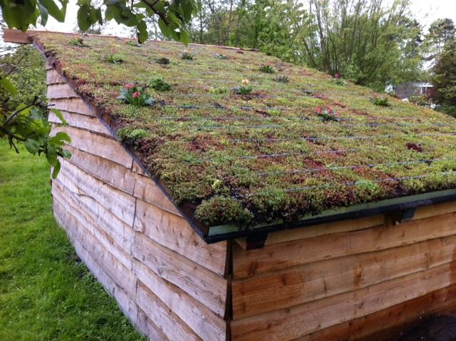 Xcellent plug® - Green Roof